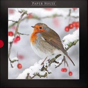 Caja de 16 tarjetas de Navidad (PH-XLDB0065) Robin Redbreast - de la gama Darkroom de Paper House